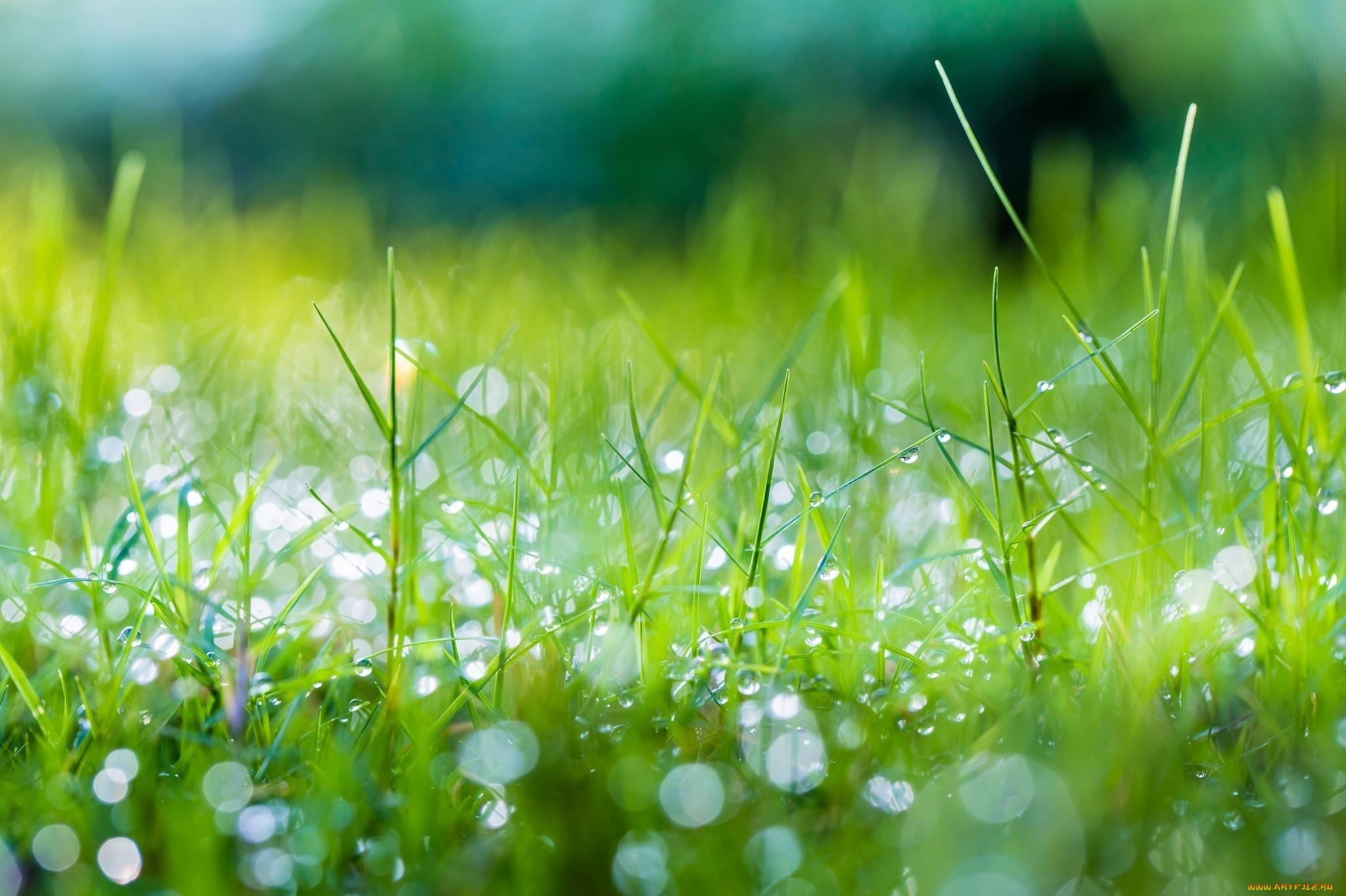 Картинки с травой и росой